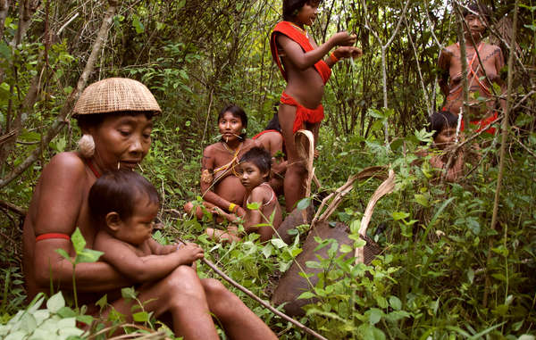 As noted by Survival International,Napoleon Chagnon's view that the Yanomami are 'sly, aggressive and intimidating' and that they 'live in a state of chronic warfare' has been widely discredited.