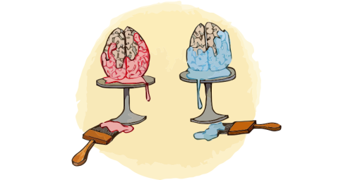 gendered-brains